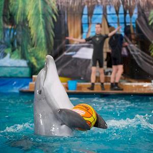 Дельфинарии, океанариумы Караидели