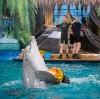 Дельфинарии, океанариумы в Караидели