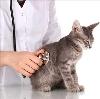 Ветеринарные клиники в Караидели